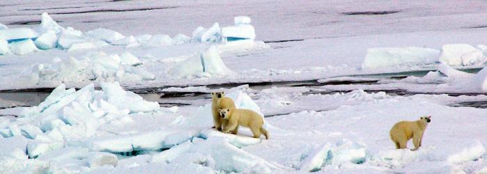 北極点クルーズ14日間