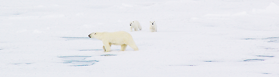 北極旅行・北極クルーズのイメージ