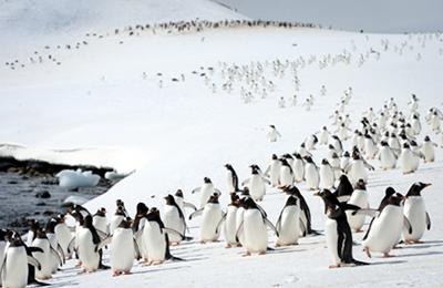 南極 アウトドア&スポーツ