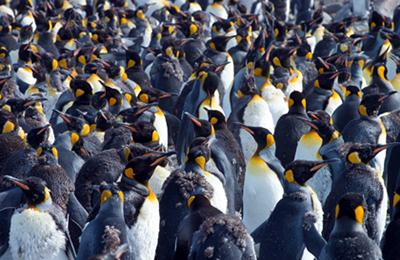 南極 効率よく贅沢に