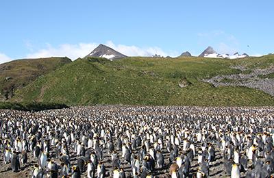 南極 出発日で選ぶ!