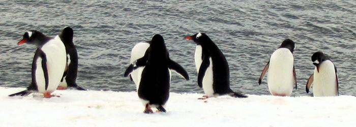 南極半島&サウスシェットランド諸島11日間
