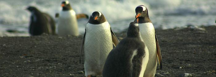 南極半島&サウスシェットランド諸島(南極圏横断)14日間