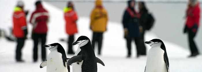 フライ&クルーズ:南極圏探索11日間