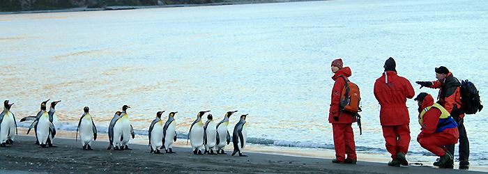 【キングペンギンとの遭遇】深堀りサウスジョージア17日間
