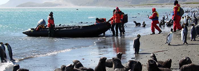 【キングペンギンとの遭遇】フォークランド(マルビナス)諸島&サウスジョージア島、南極半島 18日間