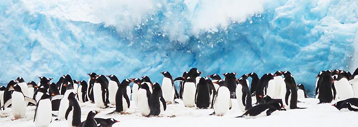 南極半島&サウスシェットランド諸島10日間/ブエノスアイレス発着