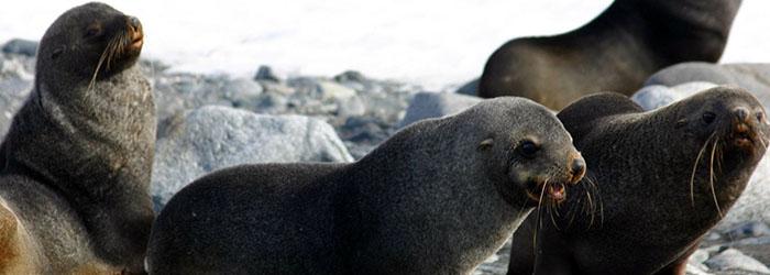 南極で過ごすクリスマス11日間(前泊ホテルなし)