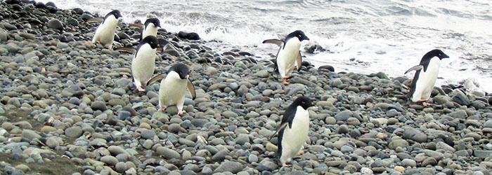 南極エクスプレス:南極半島7・8日間(オールインクルーシブ)