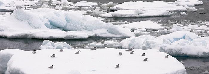 南極エクスプレス(�T)南極半島8日間