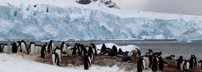 南極エクスプレス(�U)南極圏横断11日間