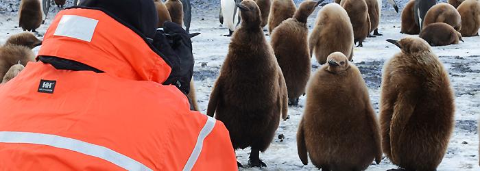 フライ&クルーズ:南極半島、ウェッデル海&フォークランド(マルビナス)諸島12日間