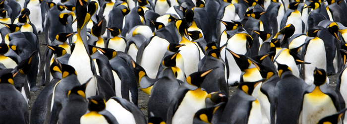 フライ&クルーズ:南極半島、サウスジョージア島&フォークランド諸島17日間