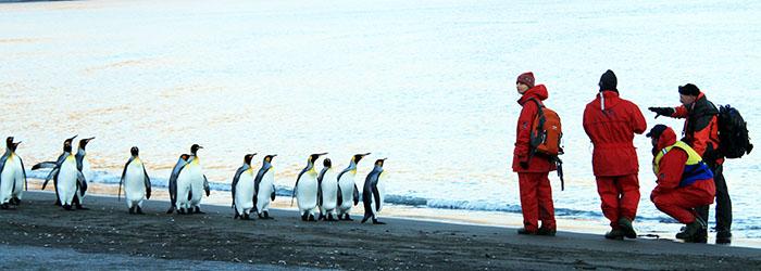 フライ&クルーズ:南極半島&サウスジョージア島17日間