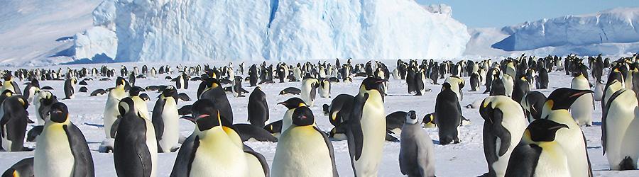 南極旅行・南極ツアー イメージ