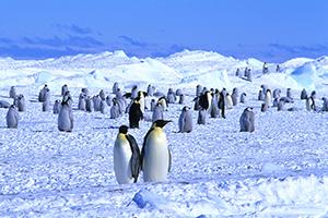 航空機で行く南極大陸・皇帝ペンギン&皆既日食ツアー