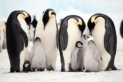 南極旅行イメージ