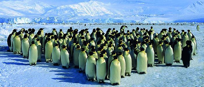 プライベートジェットで行く南極大陸9日間皇帝ペンギン営巣地見学ツアー