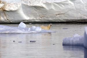 北極クルーズ イメージ