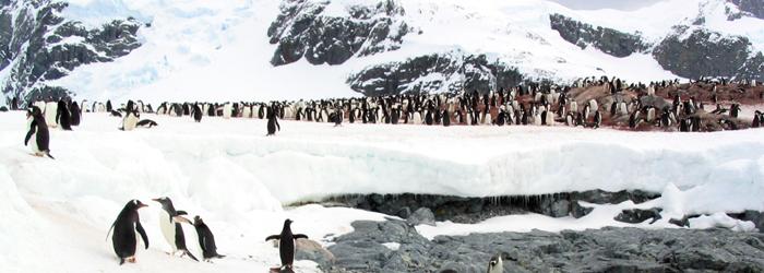 南極フライ&クルーズ:(�T)南極半島&サウスシェットランド諸島8日間