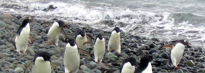 南極フライ&クルーズ:(�V)サウスシェットランド諸島6・7日間