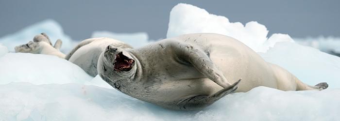 南極半島&サウスシェットランド諸島クルーズ 11・12日間イメージ