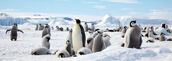 皇帝ペンギンサファリクルーズ14日間/スノーヒル島(ウエッデル海域)