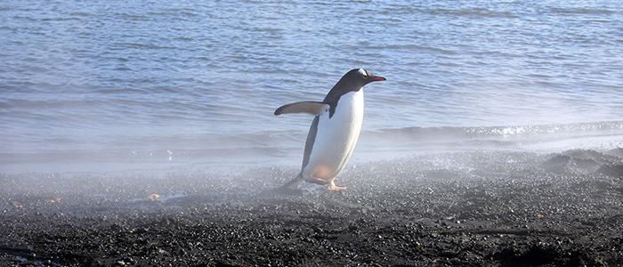 フライ&クルーズ:南極圏探索12・13日間(前泊ホテルなし)/チャーター機付イメージ