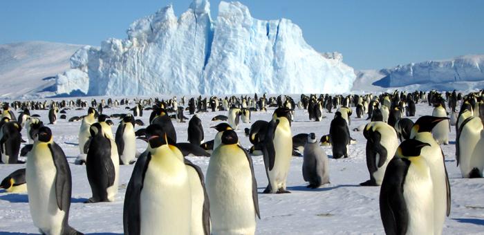 皇帝ペンギンに出会える旅9日間