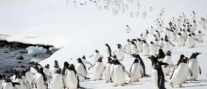 南極半島&サウスシェットランド諸島11・12・13日間イメージ