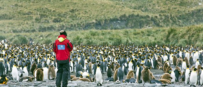 フォークランド諸島(マルビナス)、サウスジョージア&南極半島20・21日間イメージ
