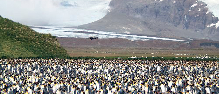 フォークランド諸島(マルビナス)、サウスジョージア&南極半島22日間イメージ