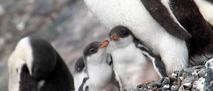 南極エクスプレス(�T)南極半島8・9日間イメージ