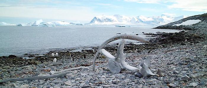 南極フライ&クルーズ:(�T)南極半島&サウスシェットランド諸島8日間イメージ