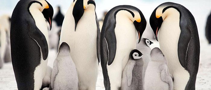 フォークランド(マルビナス)諸島、サウスジョージア&南極半島(南極圏横断)23日間/ブエノスアイレス発着パッケージ付 イメージ