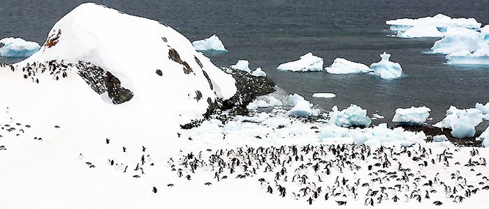 南極フライ&クルーズ:南極エクスプレス(�U)11日間イメージ