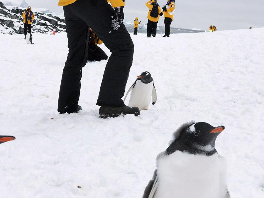 南極半島&サウスシェットランド諸島クルーズ(南極圏横断)にご参加のT.H さん