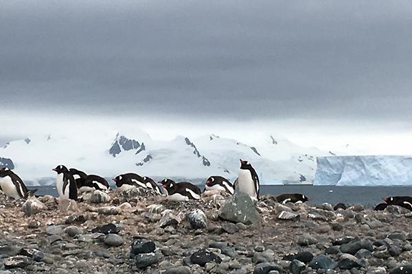 南極フライ&クルーズエクスプレス6日間体験談