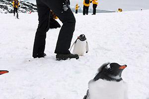 T.H さん南極体験談